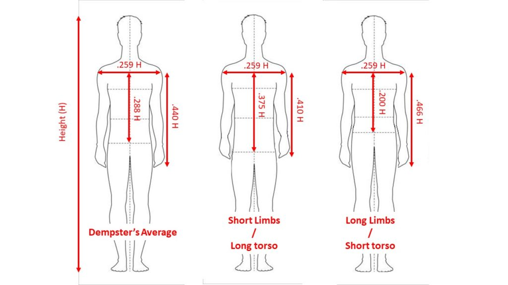 PROPORTIONS FOR LONG ARMS