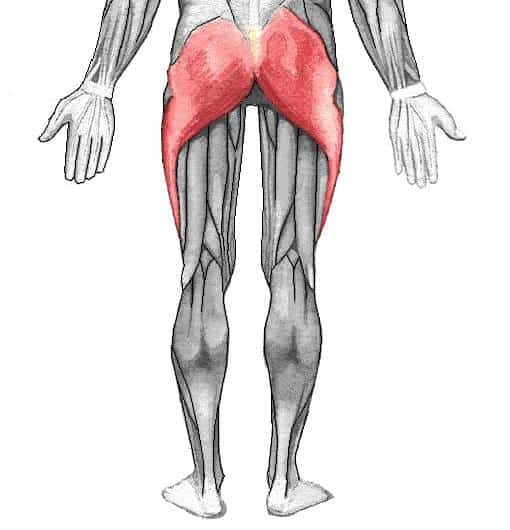 glute muscles in the deadlift