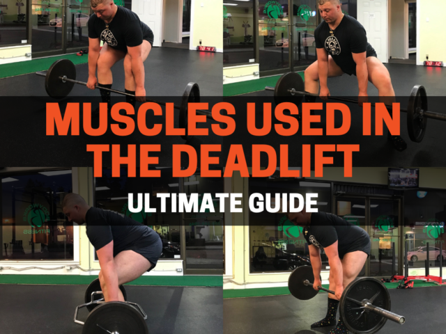 Muscles Used In The Deadlift (Ultimate Guide)