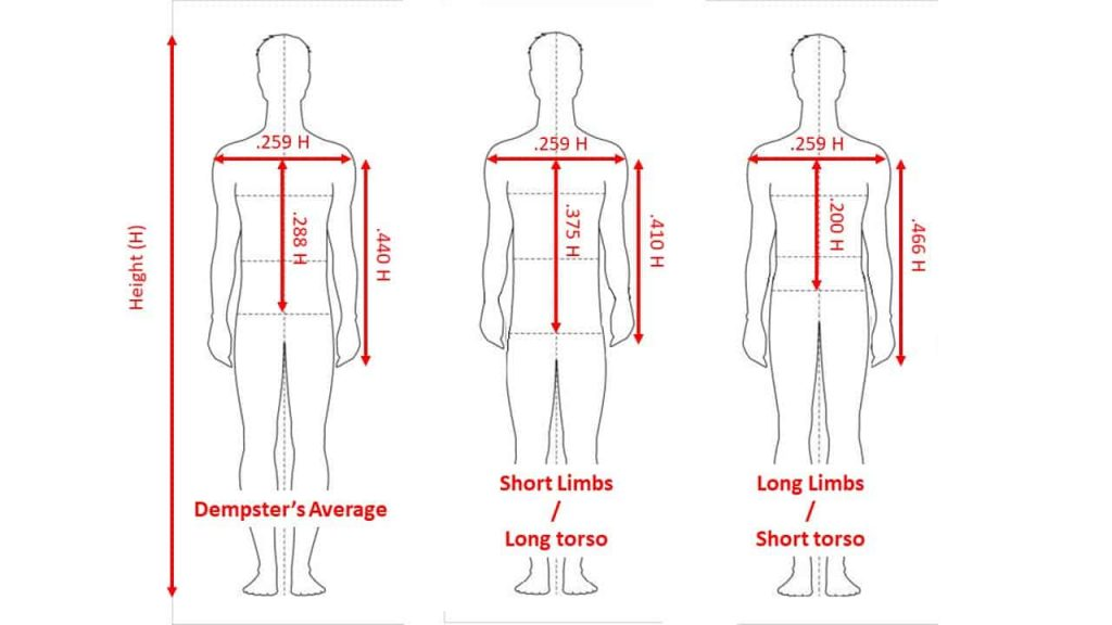 Limb lenghts and grip width