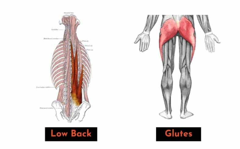 if you squat with a more bent-over back angle, you will use more low back and glutes and less quads