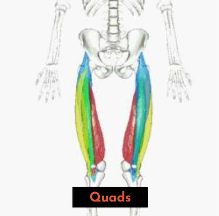 if you squat with a more vertical back angle, you will use more quads and less low back and glutes