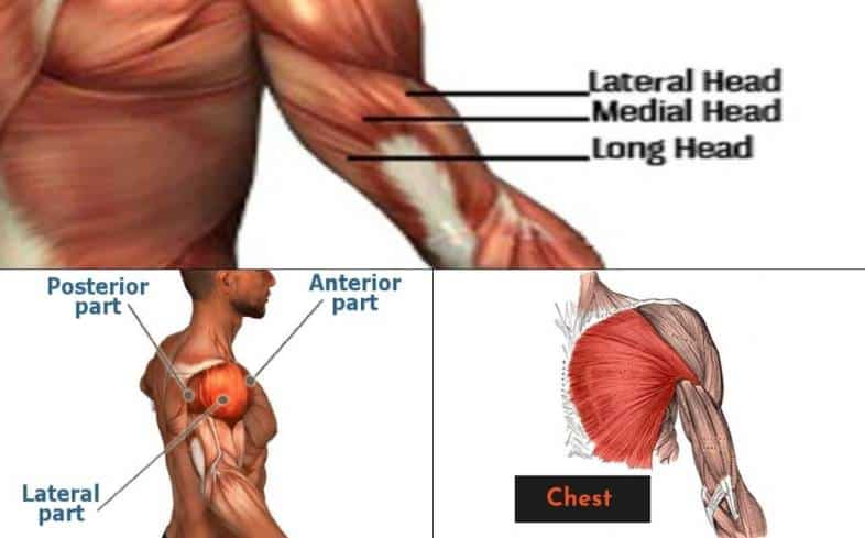 if you're weak off the chest, it means your pecs are a limiting muscle group and you need to work on specific exercises to get them stronger