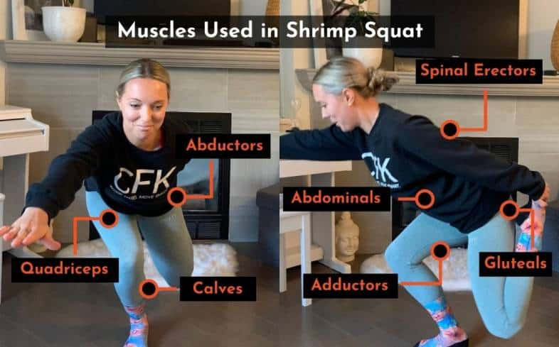 muscles used in the shrimp squat