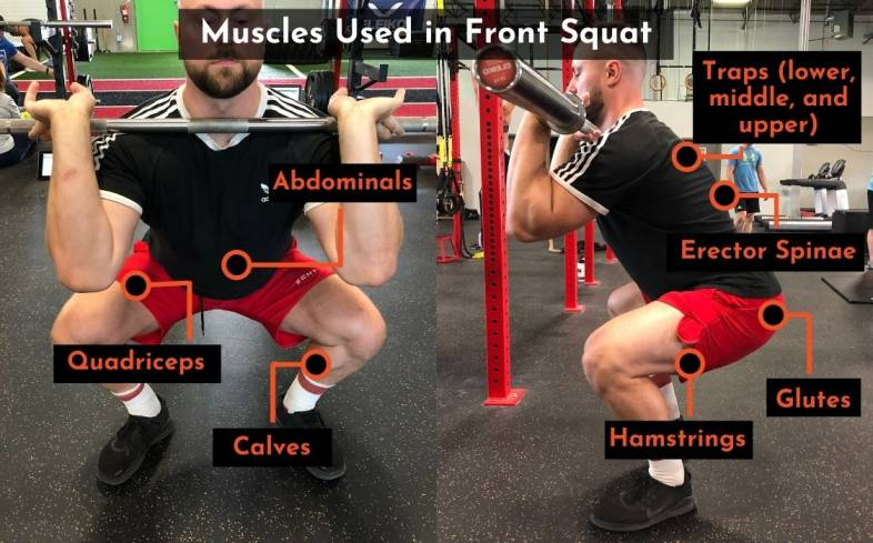 muscles used in the front squat