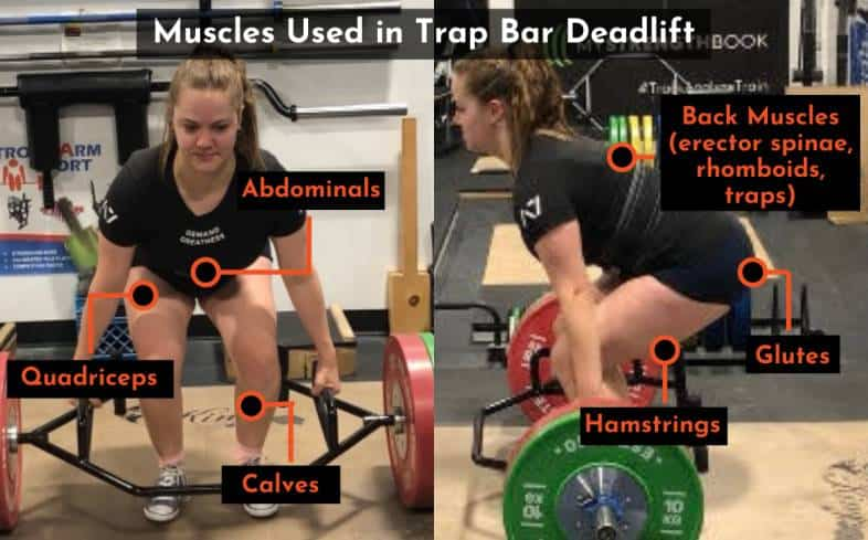 muscles used in the trap bar deadlift
