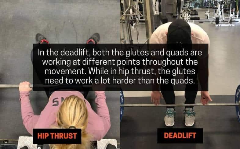 movement pattern in hip thrust versus deadlift