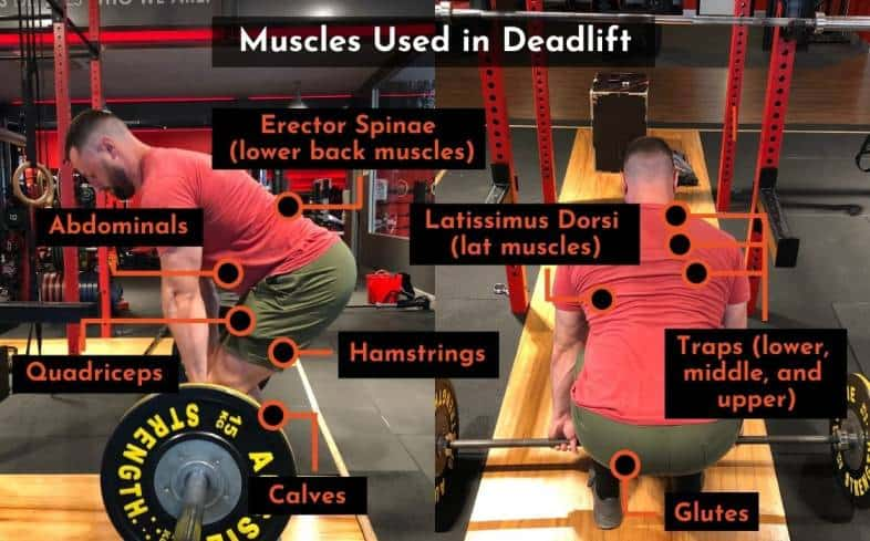 the muscles used in the deadlift