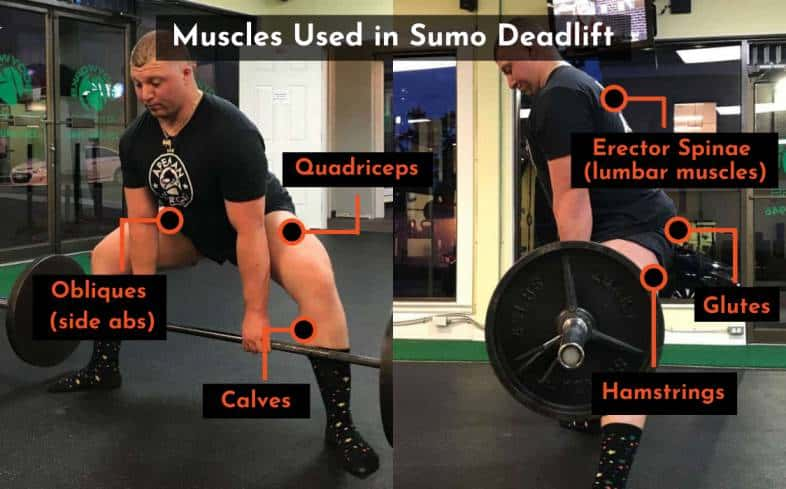 muscles used in the sumo deadlift