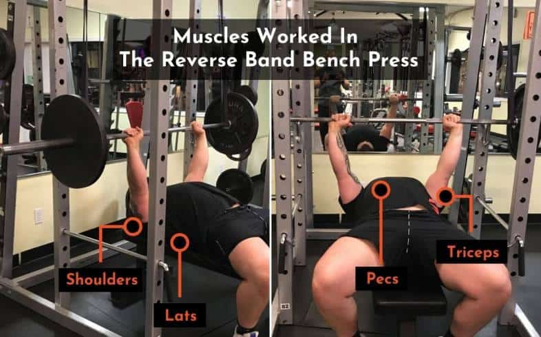 muscles worked in the reverse band bench press