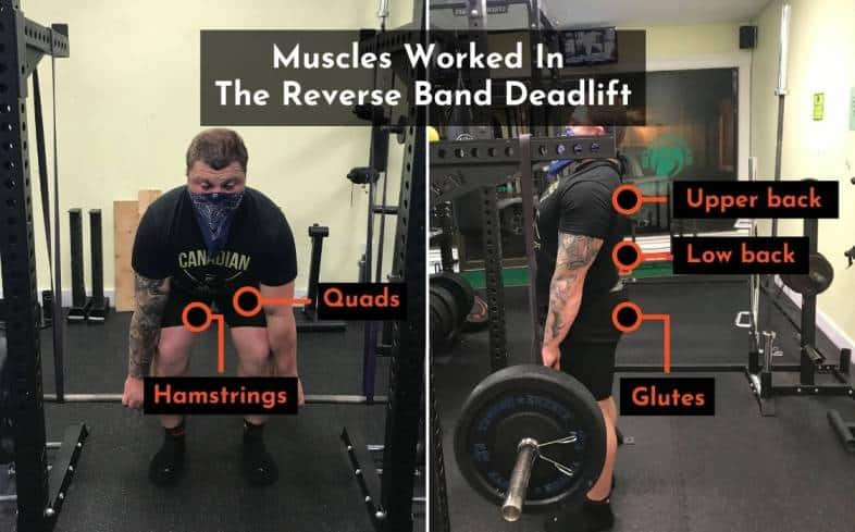 muscles used in the reverse band deadlift