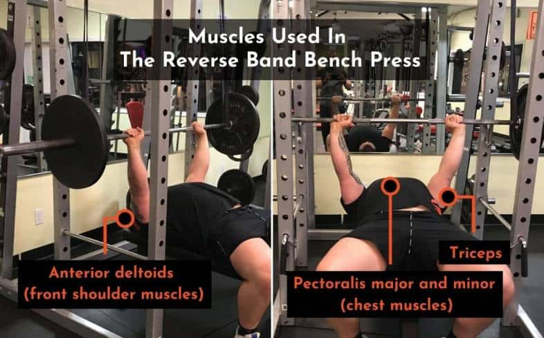 the muscles used in the reverse band bench press