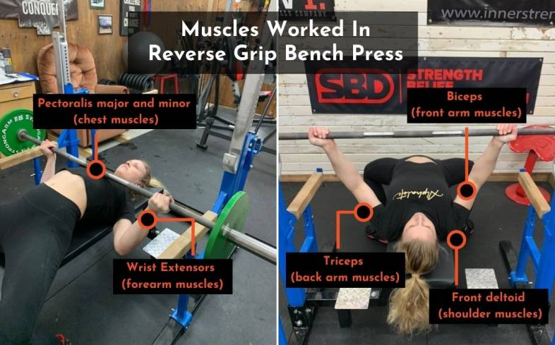 the muscles used in the reverse grip bench press
