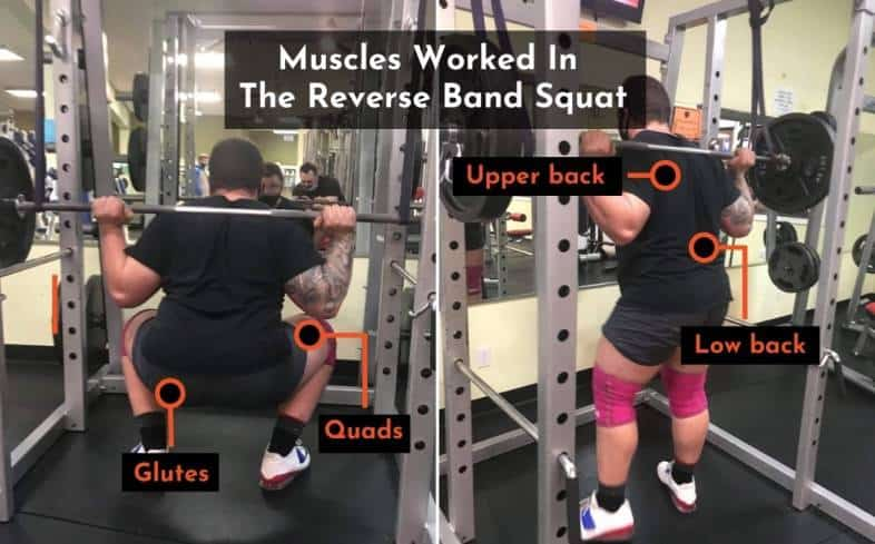 the muscles used in the reverse band squat