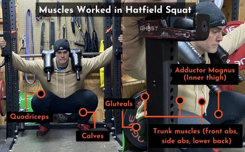 the muscles used in the hatfield squat