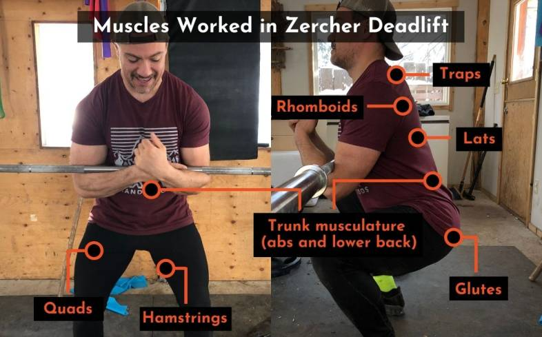 muscles worked in zercher deadlift