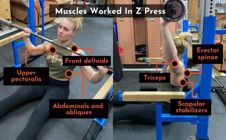 the muscles used in the z press
