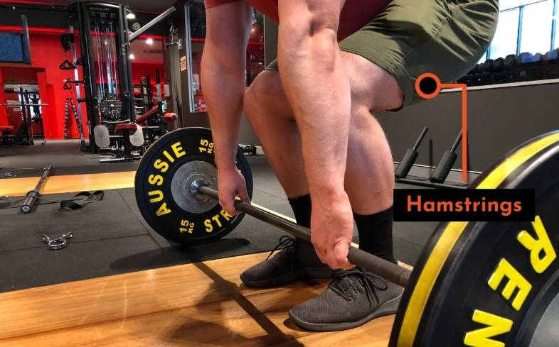 hamstrings muscles are on the back of the thigh and contribute to extending your hips