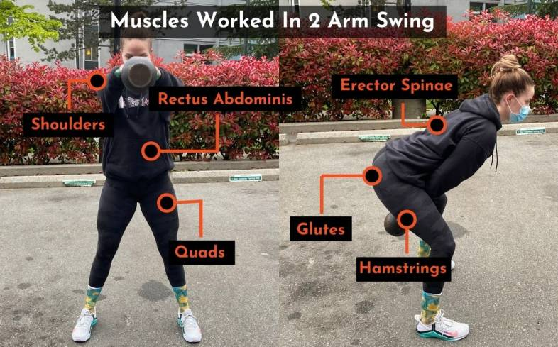 muscles worked in the 2 arm swing