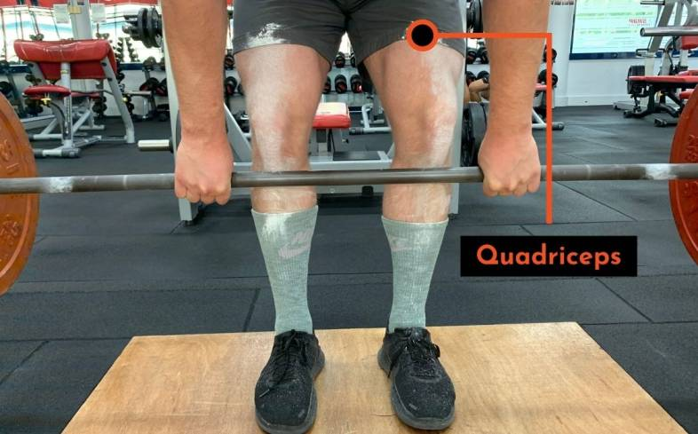 quadriceps muscles are responsible for straightening your knee during the deadlift