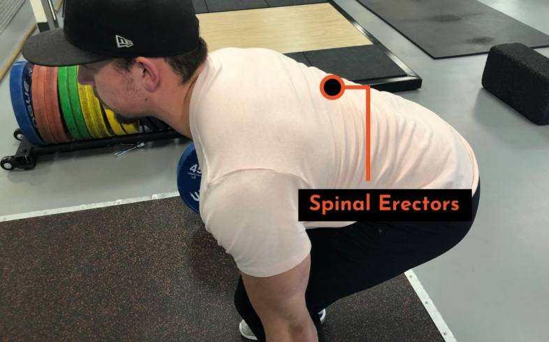 the spinal erectors help prevent back from rounding in the deadlift.