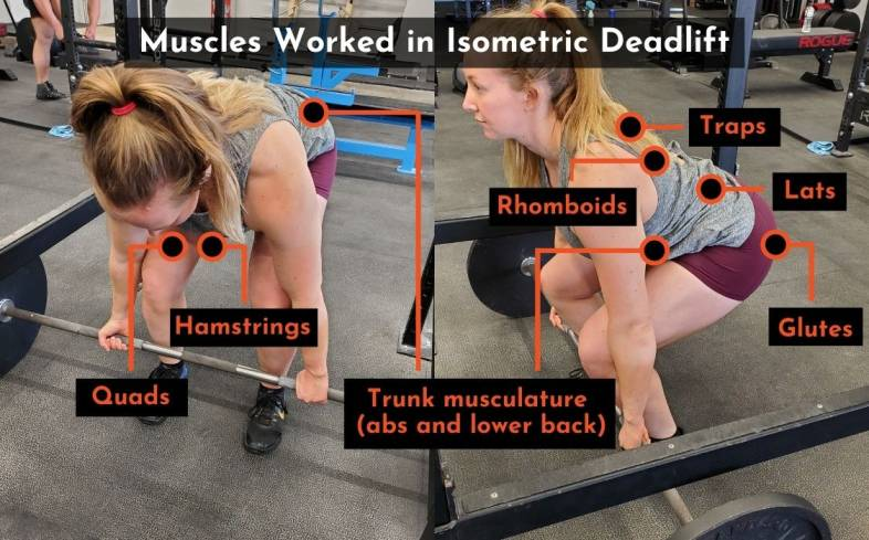 the muscles used in the isometric deadlift