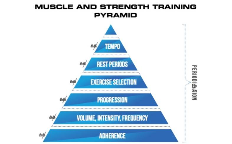 muscle and strength training pyramid