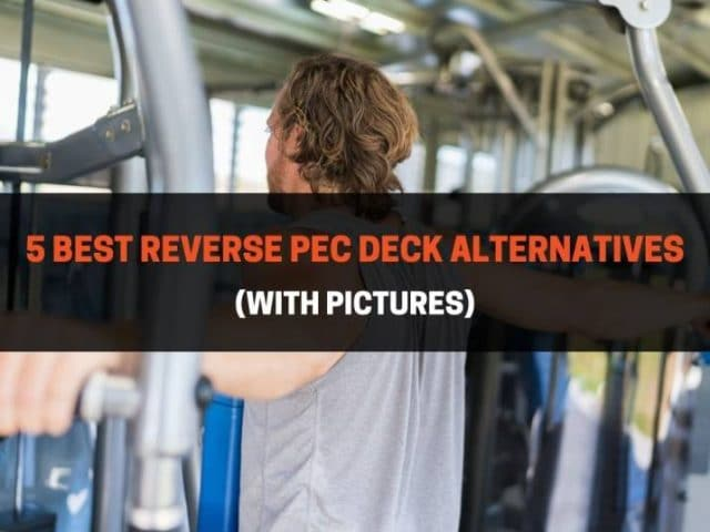 5 Best Reverse Pec Deck Alternatives (With Pictures)