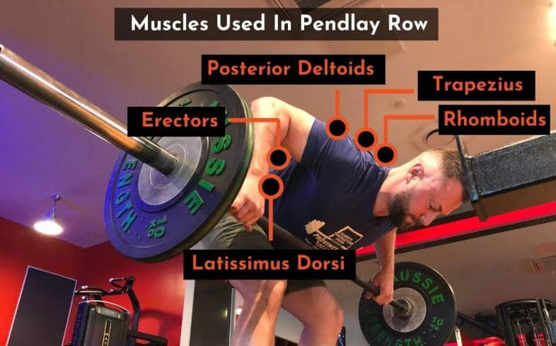 the muscles worked in the pendlay row